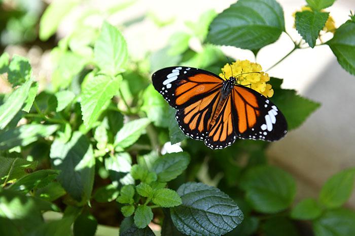 昆虫館パピヨンシャトーの写真1